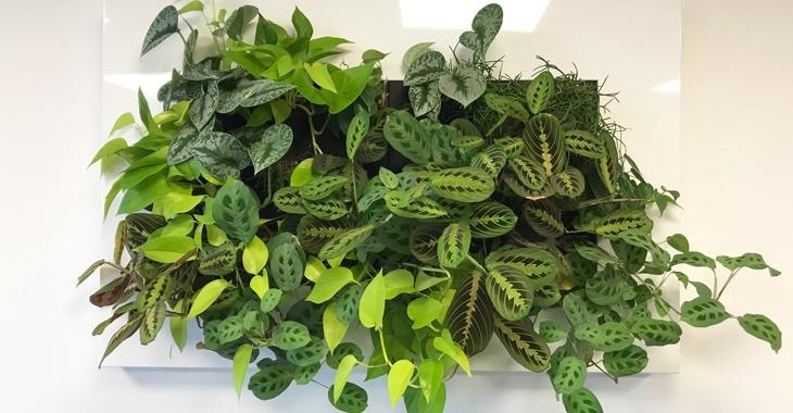 Gröna växter för trivsamma arbetsplatser!